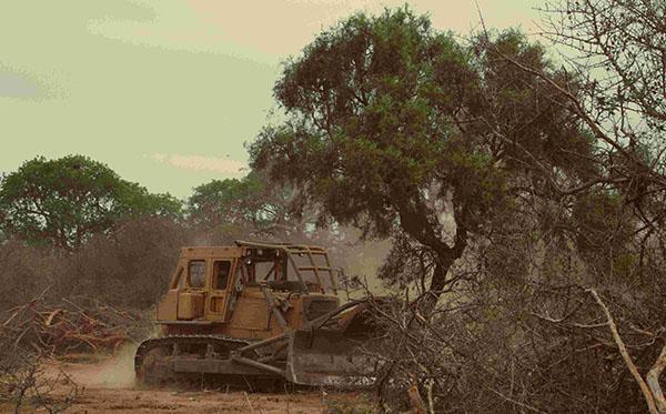 Extractivismo y Pueblos Indígenas